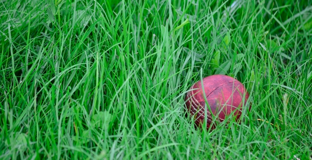 cricket ball lying in the long grass